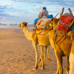 Camels on Vacation