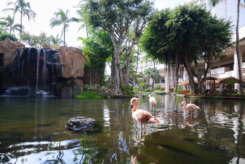 Grand Hawaii Tour 2019 Escorted By Fox World Travel