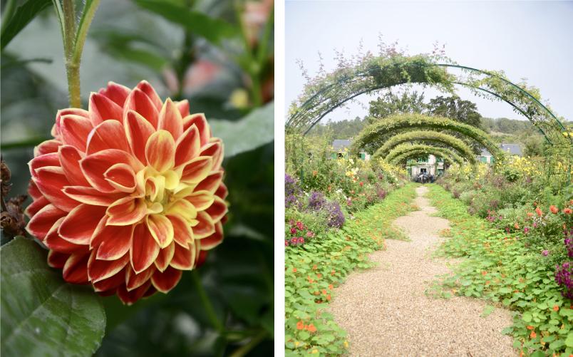 Botanical Garden in Europe