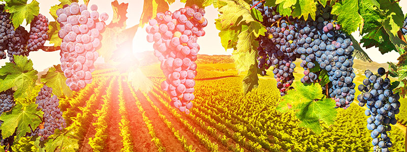 Incentive Travel to Napa Valley