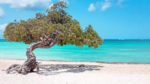 Captivating Aruba