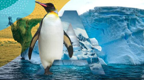 A Polar Voyage of a Lifetime: Antarctica