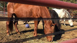 Janesville horse rescue center helps save part of historic wild mustang herd