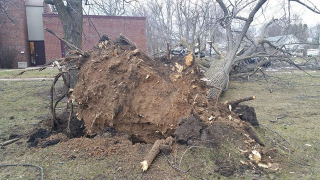 Police cars crushed by wind-blown trees in Northern Wis.