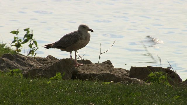 Call for Action: Why Dane County says lowering lake levels won't help stop flooding