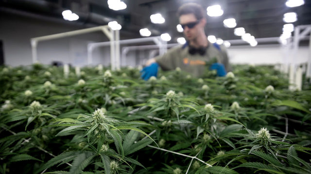 Marijuana Inc.: Billions at stake as states move to legalize cannabis