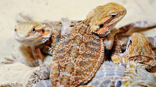 Exotic Pets: Fear and fascination in Madison