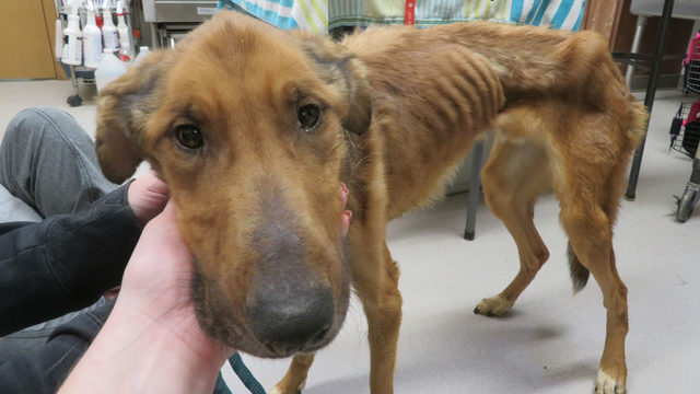 Arrest made after dog found starving along Wisconsin highway