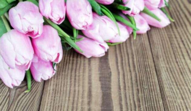 Flores-Ingimage.jpg