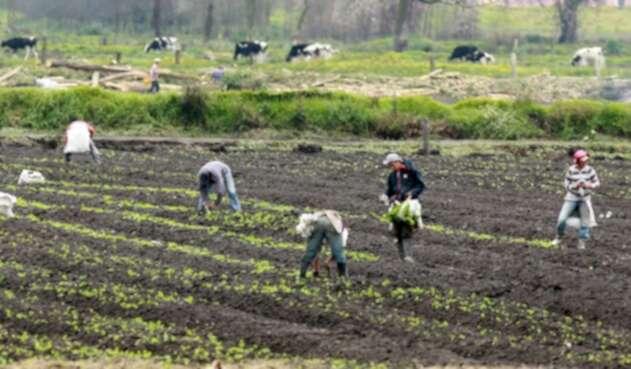 agricultoreslafm.jpg