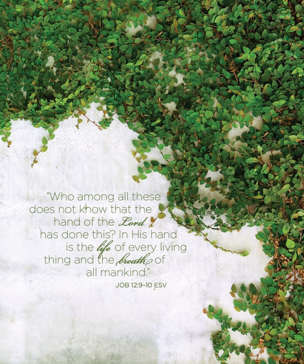 A wall covered with ivy and the Bible verse Job 12:9-10
