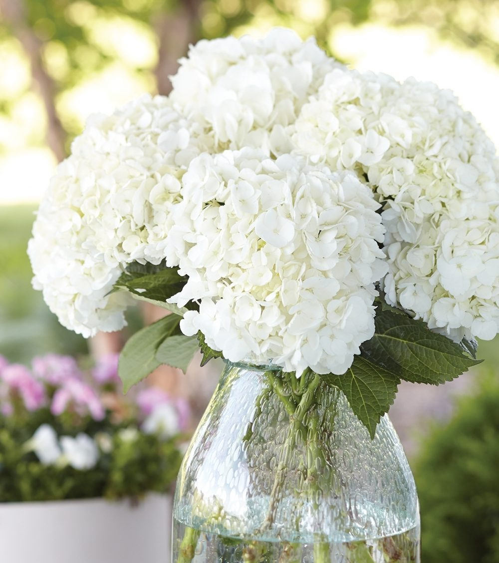 A centerpiece of white hydrangeas is at home in a setting for casual al fresco dining.