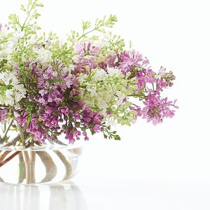A lilac bouquet starts with a cutting planted in good soil that must be tended, watered and pruned. The process God uses for shaping your life is similar.