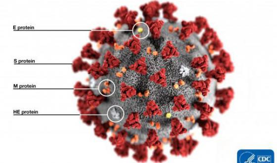 What the Coronavirus Means for People with Lupus