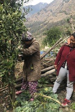 Two Nepali community members plant and prune orange trees