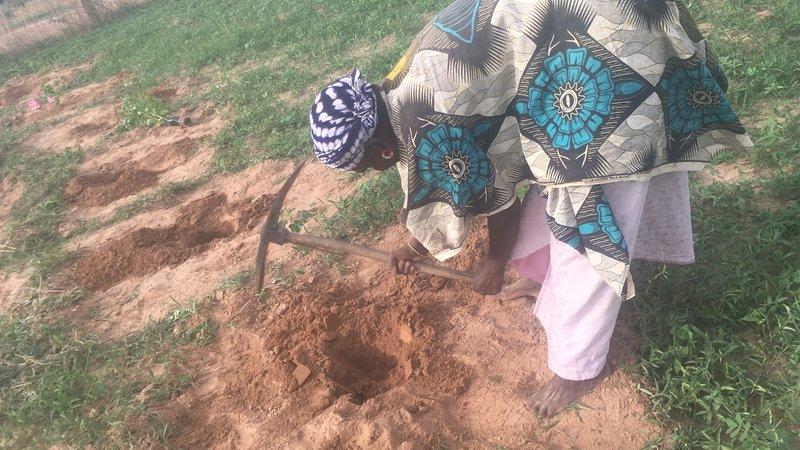 Outplanting Digging