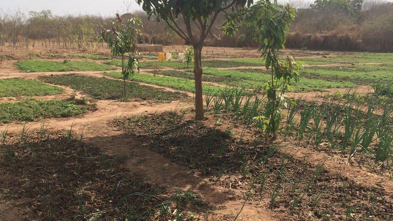tree in garden