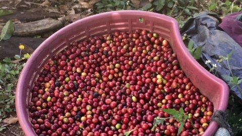 Coffee Article 4.jpg
