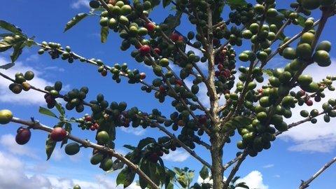 Coffee Article 3.jpg