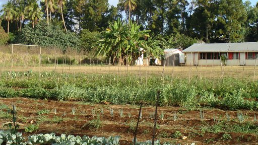 Award-winning school garden at a Volunteer's school
