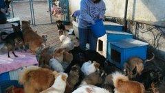 Deborah Sesek, a community development Volunteer, feeds dogs at an animal shelter where she volunteers.