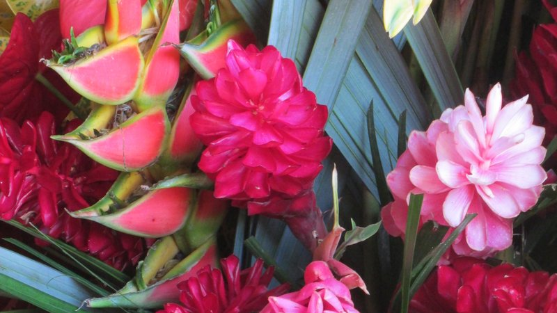 A close-up shot of tropical flowers