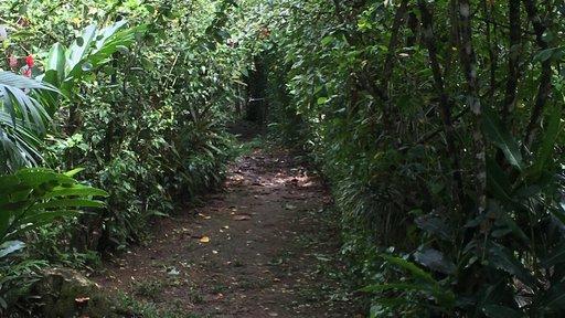 Garden, Costa Rica