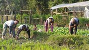 Bio-Intensive Gardening in Nepal