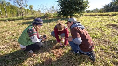 Tree plantation at  Paraguay Verde Camp