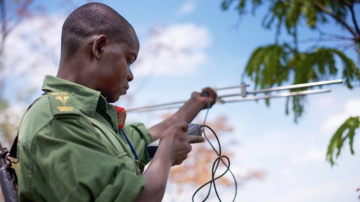 Reserve Ranger Bernard Moses radio-tracking collared elephants.