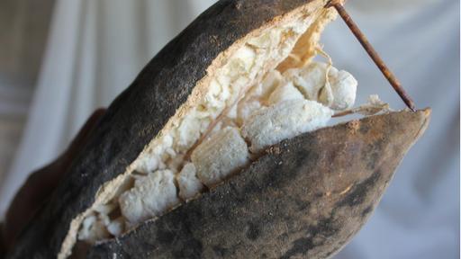 baobabfruit