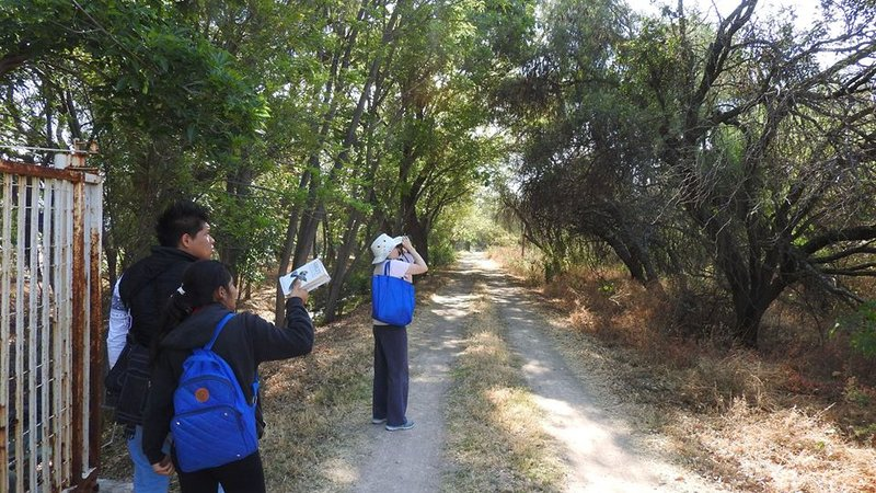 Carolyn and two ITESI students search the trees for birds in the state of Guanajuato, Mexico.