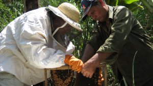 Quality keeping: Beekeeping in Comoros