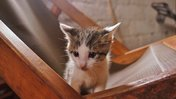 5 reasons to have a pet in the Peace Corps