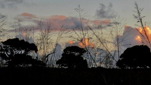 Tongan trees at sunset