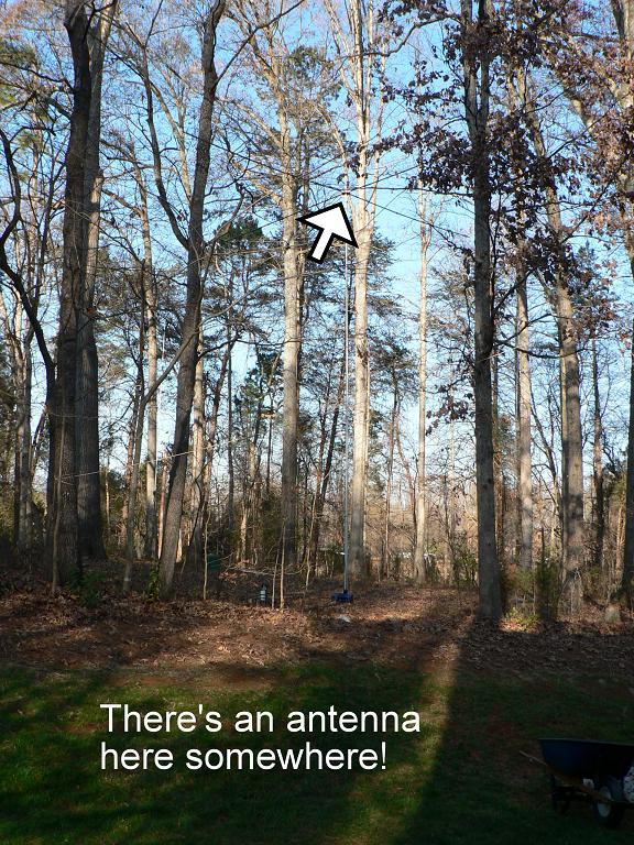 My new Spiderbeam sits among the trees.