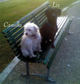 CAMILLA (RIP) & LIZ