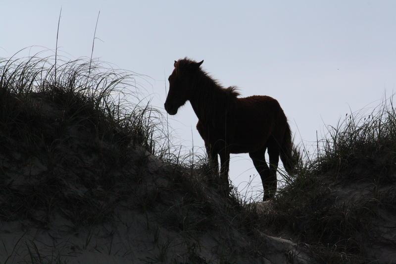 Wild Horse at Corolla NC