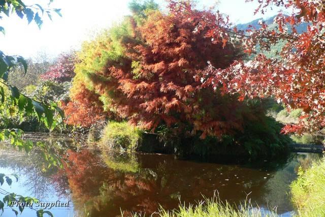 Pond in Autum