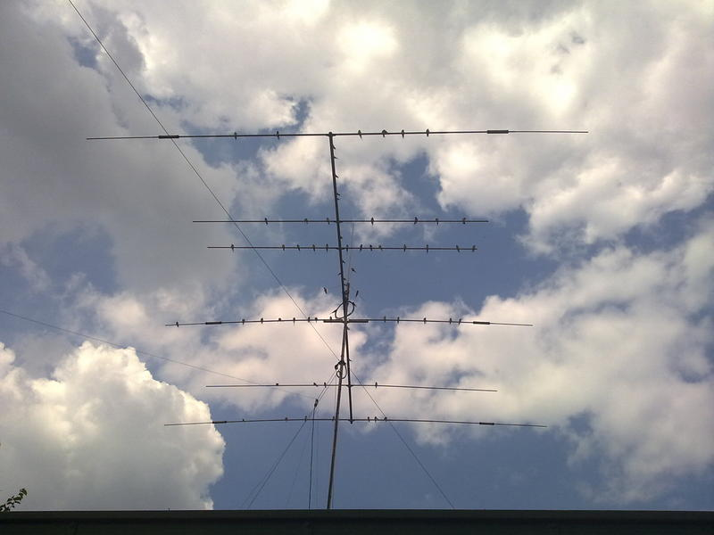 Swallows on yagi