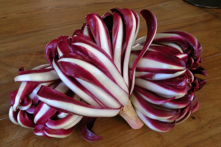 Treviso red chicory