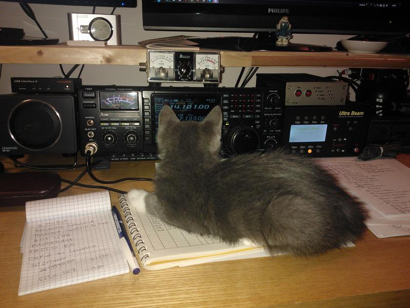 my cat Tolomeo seeking for a dx...