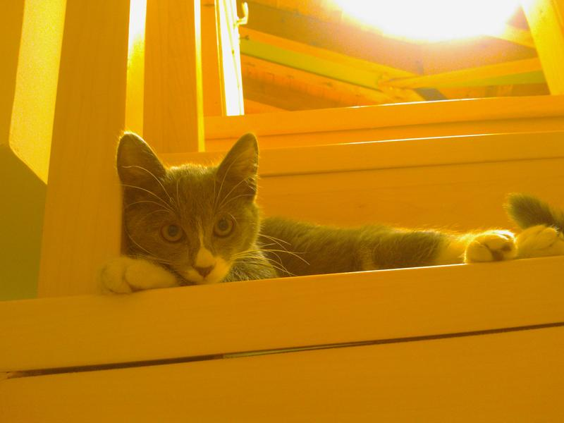 my cat Tolomeo