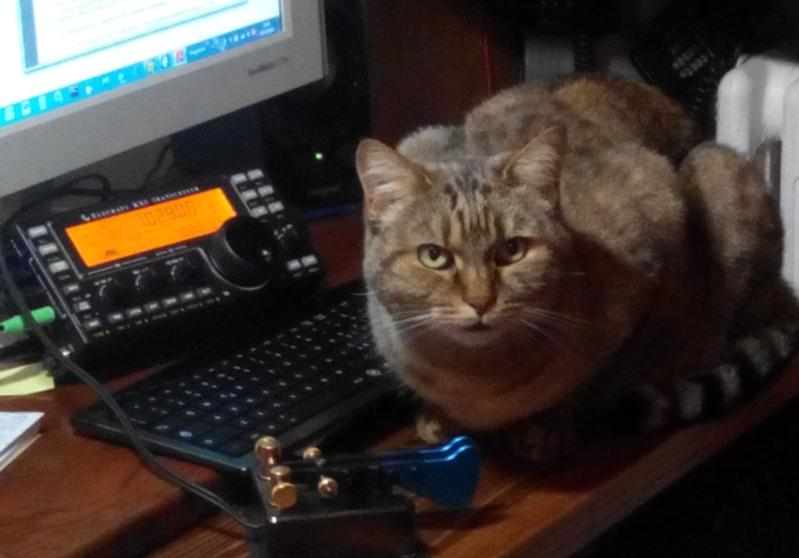 IW7DMH/cat