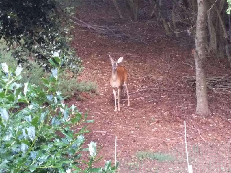 Visitor to the antenna farm