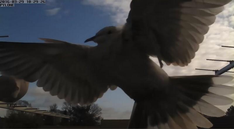 Birdies on aerials 2016