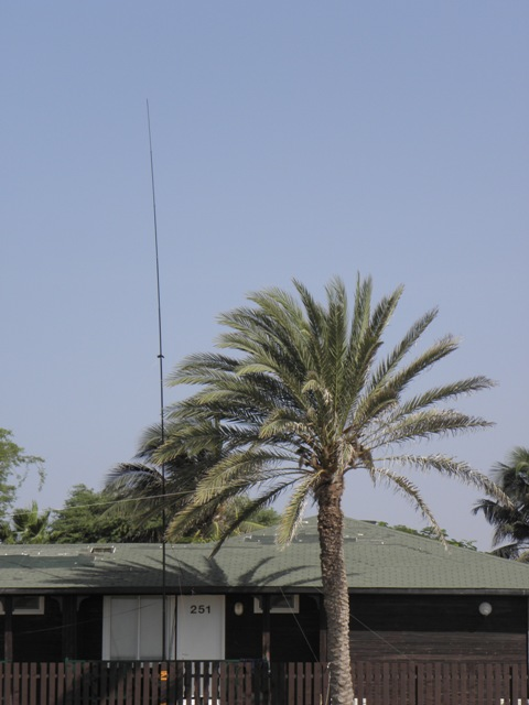 The vertical triple leg (12m fiberglass pole) and one end of the doublet at the palm tree