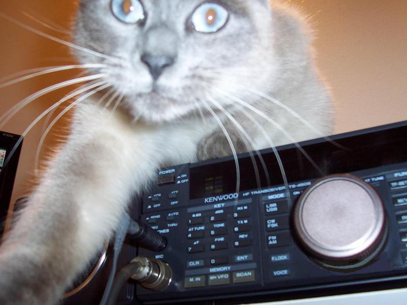 My cat Thay!!