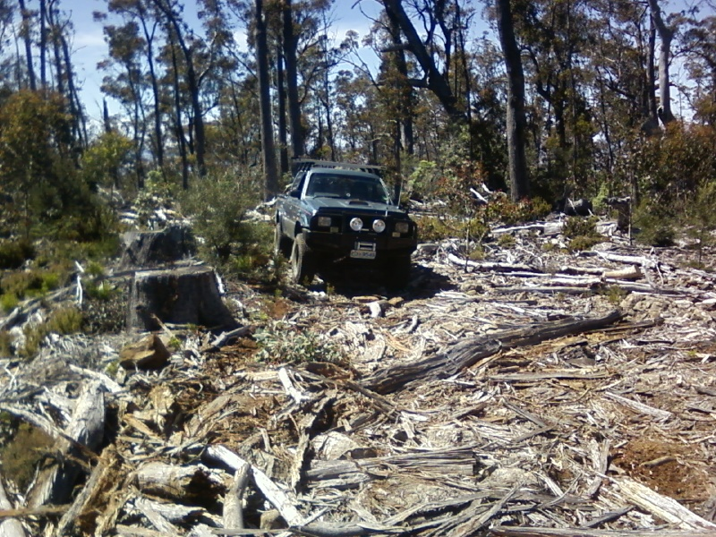 the bravo out in the  bush