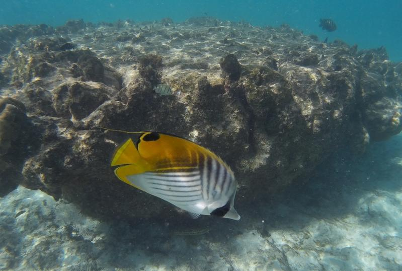 Lagoon snorkeling surrounding Rarotonga